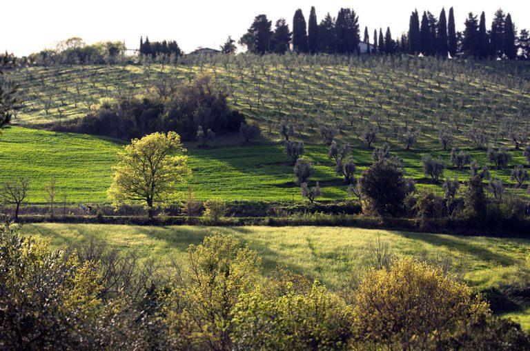 Schiffscharter Italien - Toskana Landschaft