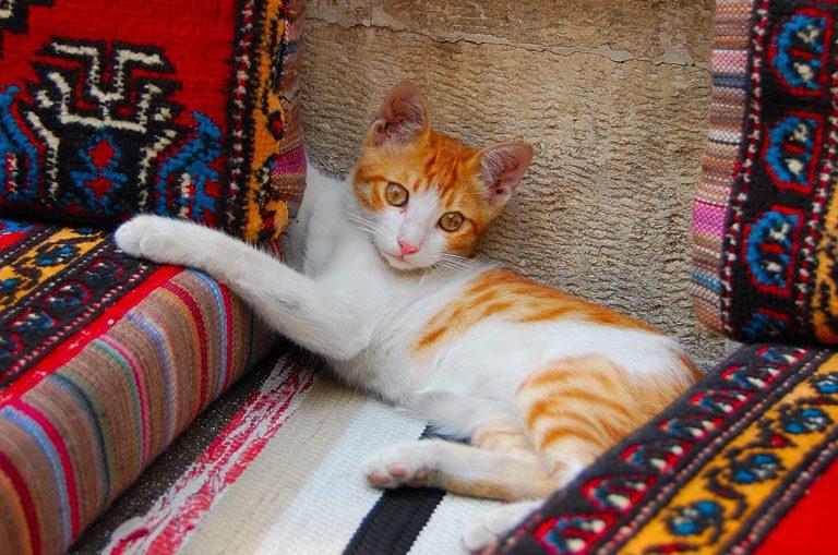 Schiffscharter Türkei - Katze