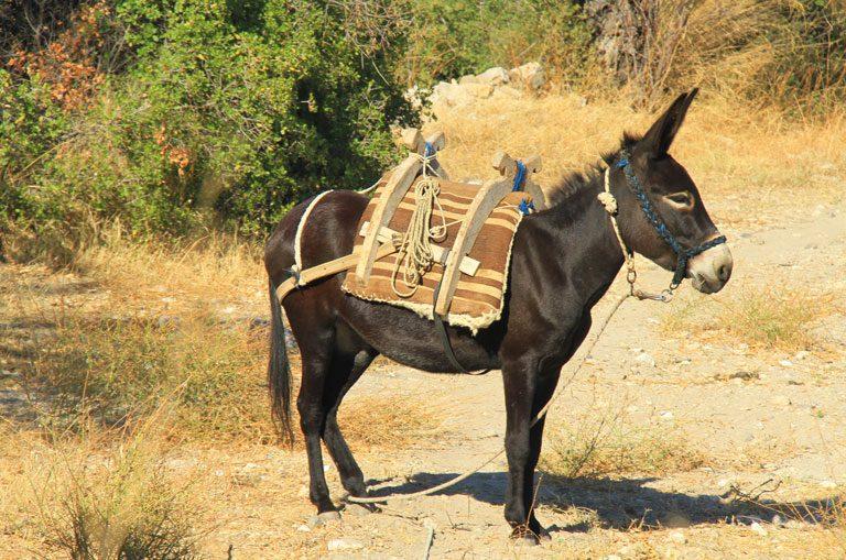 Schiffscharter Türkei - Esel